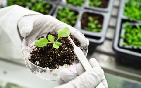 Mechanizm zachodzący w roślinach pozwala na szybsze i skuteczniejsze gojenie ran