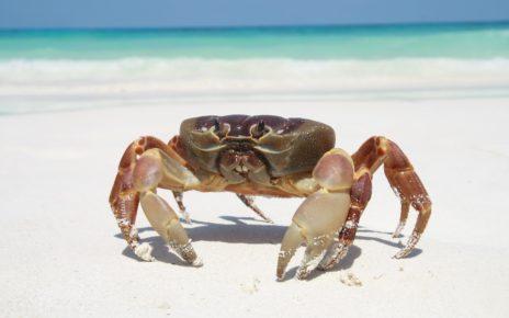 Chłonny opatrunek z muszli kraba? Nowy wynalazek łączy chitozan i nanotechnologię