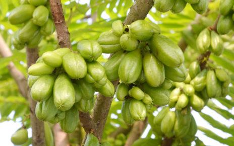 Nowy opatrunek z owoców dla diabetyków? Naukowcy potwierdzają jego skuteczność
