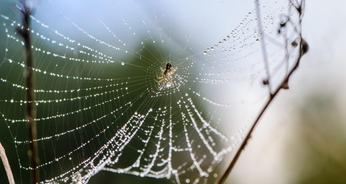 Inspirowana pająkami dwustronna taśma skutecznie zamyka rany w 5 sekund