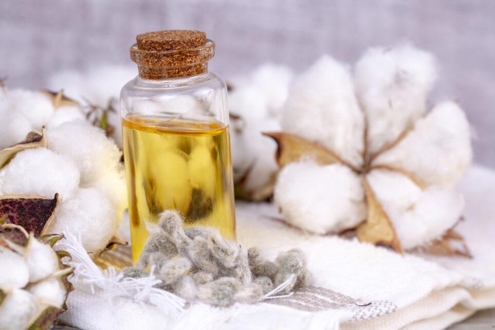 Jakie znaczenie w leczeniu ran ma olej z nasion bawełny?