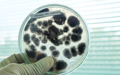 Jak grzyby wpływają na proces leczenia uszkodzeń w jelitach u osób z chorobą Leśniowskiego-Crohna?